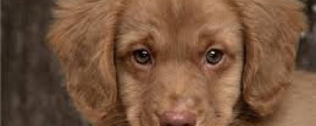 Штрафы для собачников могут увеличить в Свердловской области